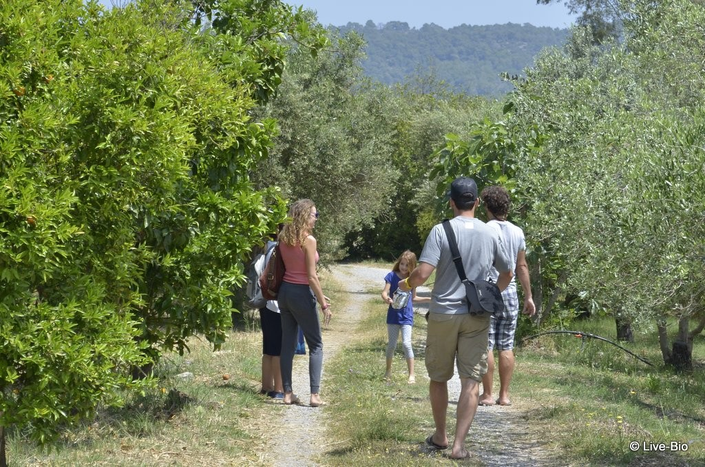 Top 10 things to do on Poros island and vicinity - The Lemon Tree forest