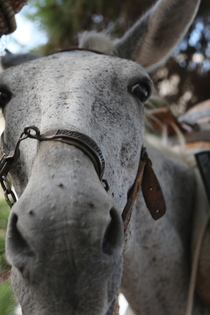 How donkey's selfie would look like :-)