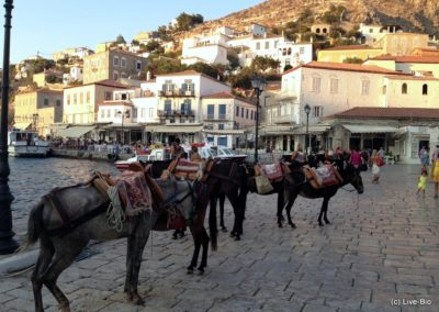 Live-Bio experience - Guided Hydra trip